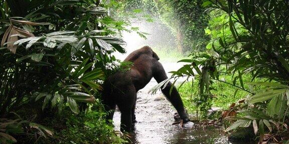 Gabon Destinations