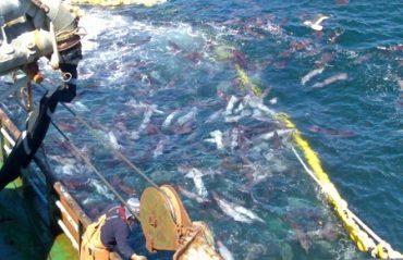 Pesca artesanal del Biobío espera respuesta a su petición de más sardina y emplaza a gobierno regional y central a reaccionar