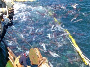 Antonio Chaparro Carrillo critica ley que prohibirá a grandes empresas pescar jibia con barcos de arrastre