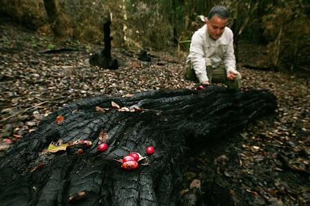 A paso firme avanza recuperación debosque nativo quemado por incendios