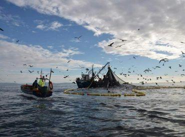 """Capitanes de pesca rechazan incorporación de extranjeros a flota nacional: """"Generaría ventajas de remuneración antisindical"""""""