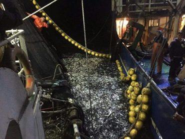 Pesca artesanal rechaza posibles concesiones para salmoneras