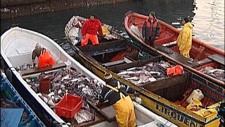 Diputado Flores apoya reapertura de registro para que pescadores artesanales puedan aumentar captura de la Jibia