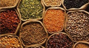 Realizan primer trafkintu para el intercambio de semillas entre comunas de Los Ríos