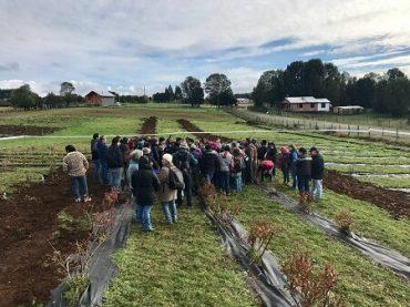 INIA Butalcura convocó dos jornadas de capacitaciones para pequeños productores que desarrollan el rubro en Chiloé