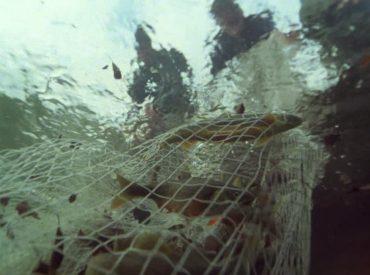 Alpescas e ICFA firmaron acuerdo de pesca sustentable y seguridad alimentaria