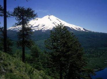 En Temuco encuentro empresarial reunió a actores del rubro forestal para abordar proyecciones y desafíos del sector