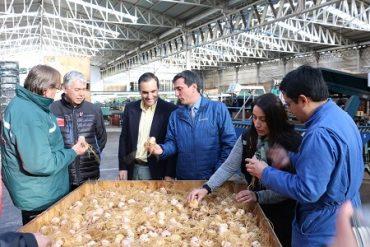 Ministro de Agricultura junto a intendente regional participaron de proceso exportador de 57 millones de bulbos de lilium
