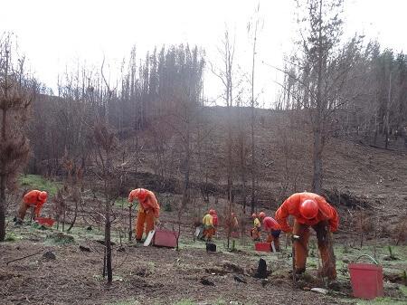 Pymes forestales aprenden nuevas técnicas silvícolas para recuperar suelos tras incendios