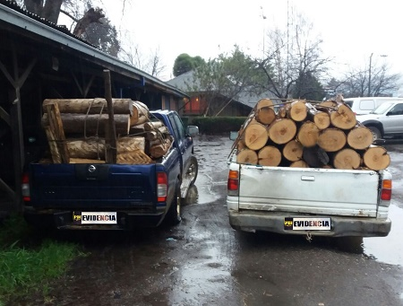 PDI detiene a ocho personas por hurto de madera en salida sur de Valdivia