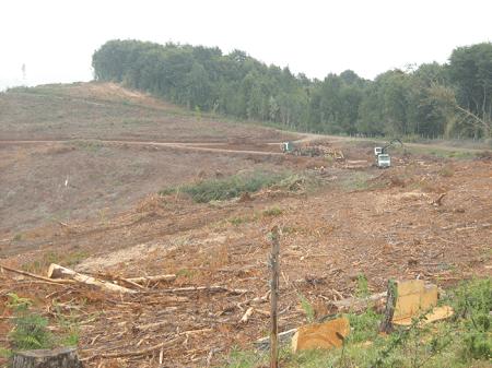 AIFBN renunció al Comité del Diálogo Forestal Nacional por falta de resultados