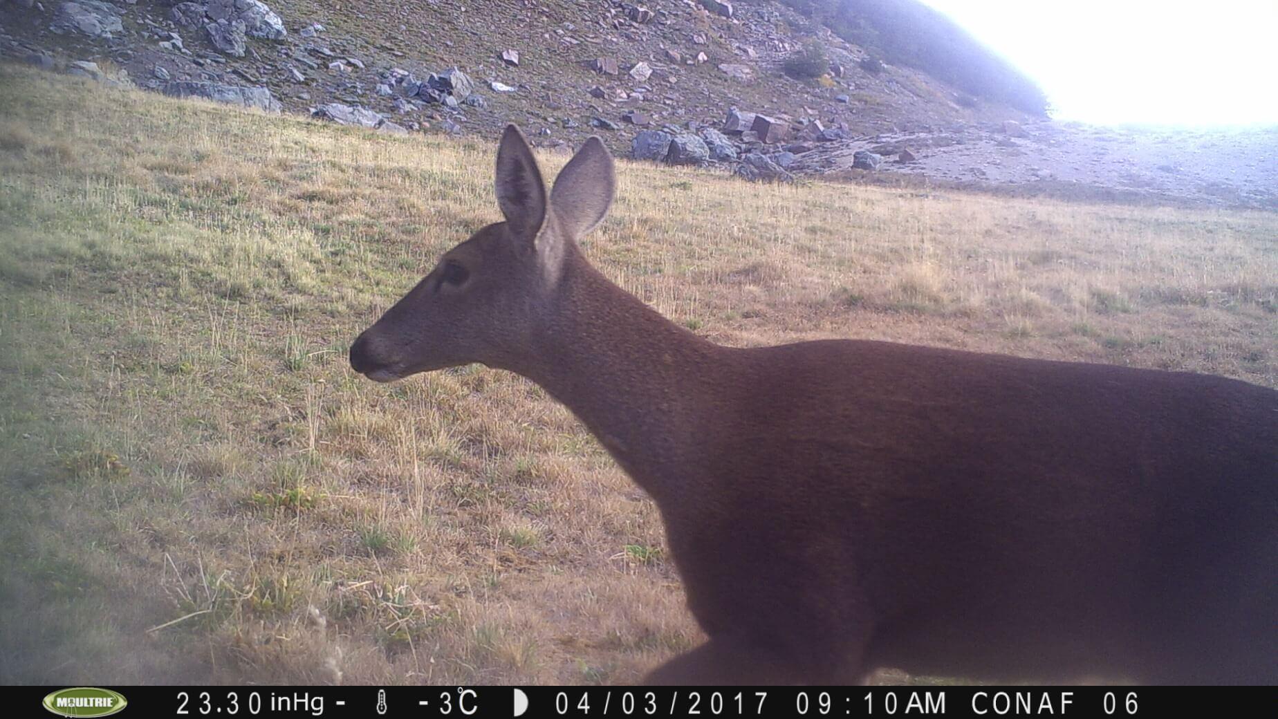 """Con """"cámaras trampa"""" monitorean y protegen especies en peligro de extinción"""
