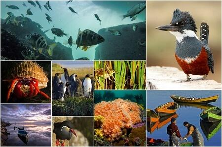 Exhibirán las fotografías finalistas del concurso Ojo de Pez en Museo de la Exploración R. A. Philippi