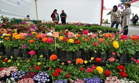 Lo mejor de las flores y jardines se vivirá este fin de semana en el parque estadio Germán Becker
