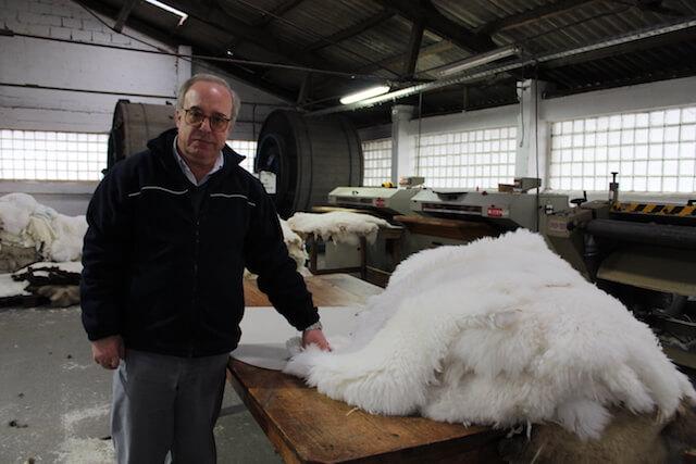 Valcuer: exportando cuero ovino desde Valdivia al mundo