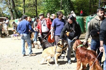 Este viernes municipio de Valdivia colocará 200 microchips gratuitos a mascotas