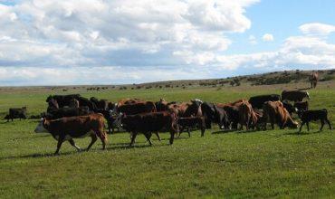 Trecientos productores de bovinos pueden beneficiarse de la flexibilizacion del programa de planteles animales bajo certificación oficial (PABCO) para acceder a mercados internacionales