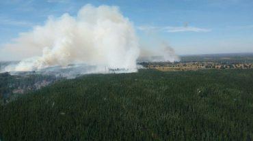 Controlado incendio forestal que  afecta a la comuna de Cabrero