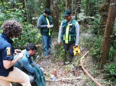 CONAF detectó corta de alerce y bosque nativo en predio aledaño a Parque Nacional Alerce Costero