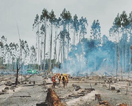 INFOR buscará recuperar bosques nativos quemados a través de siembra directa