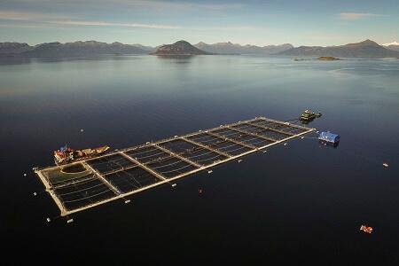 """Greenpeace ante informe de AIDA que critica ubicación de salmoneras en la Patagonia: """"Es un duro golpe a la credibilidad de la salmonicultura chilena y a la capacidad fiscalizadora del Gobierno"""""""