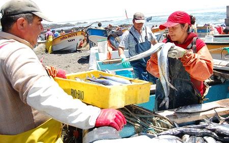 Hasta este miércoles 21 pescadores/as pueden postular como consejeros al Fondo de Fomento de la Pesca Artesanal