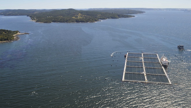 Mortalidad de salmones asciende a 2 mil 450 toneladas en 82 centros afectados entre Quellón y Magallanes