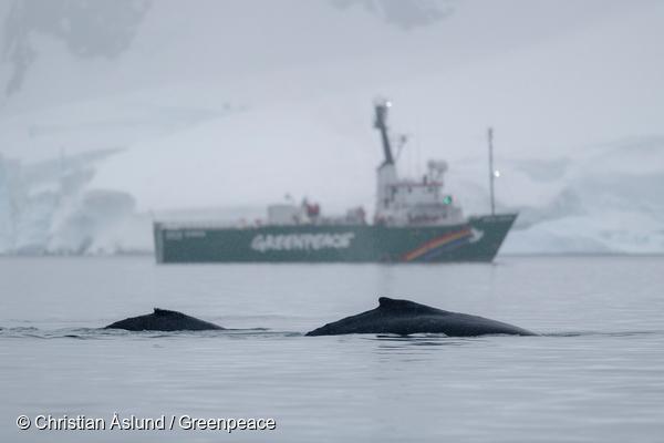 Greenpeace celebra que Chile apoyará el establecimiento de Áreas Marinas Protegidas en la Antártica