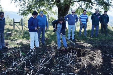 Comunidad indígena Lonco Chihuaicura cosecha semillero de papas de primera calidad con apoyo del Ministerio de Agricultura