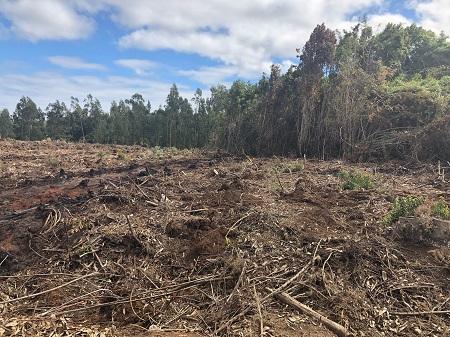 CONAF fiscaliza ejecución de quemas de desechos agrícolas y forestales en Arauco
