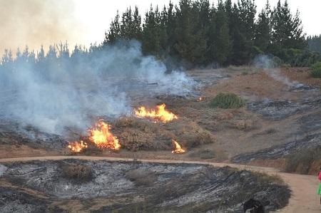 CONAF levantó restricción de uso del fuego para eliminación de desechos forestales en Concepción