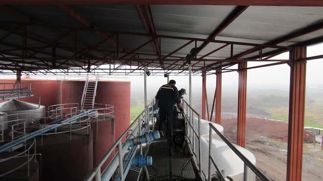 SAG realizó operativos de vendimia en la Región del Biobío