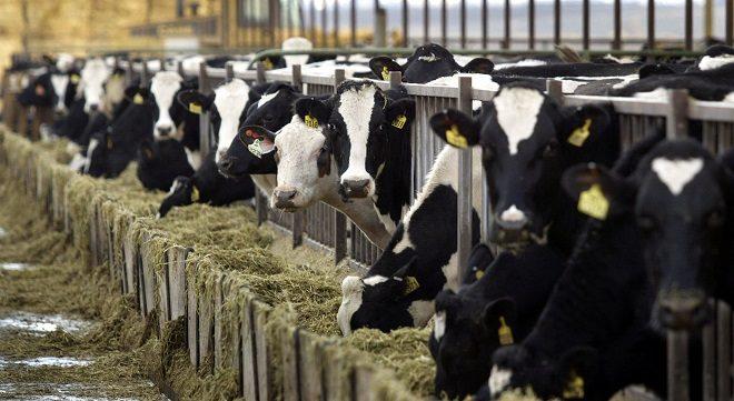 Diputado Flores llamó a los gremios lecheros de Los Ríos a alinearse con claridad en favor de la producción local