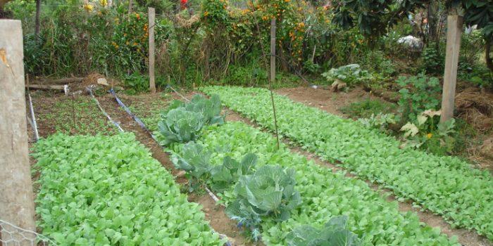 """Familias de sectores rurales de Osorno mejorarán producción de hortalizas gracias a programa """"autoconsumo"""""""