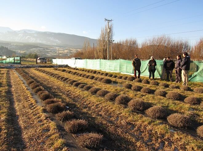 Iarú Lavanda Patagonia: trabajando por la certificación orgánica del huerto