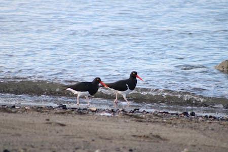 Se realizó en Punta Arenas el 1° Encuentro de Fotografía de Naturaleza