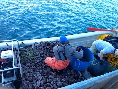 Pescadores artesanales podrán extraer locos de sus áreas de manejo hasta el día 30 de septiembre 2018