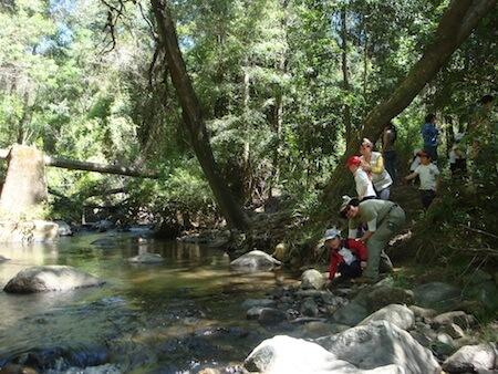 Reserva Nacional Nonguén estará cerrada temporalmente por reparación de puente Lara