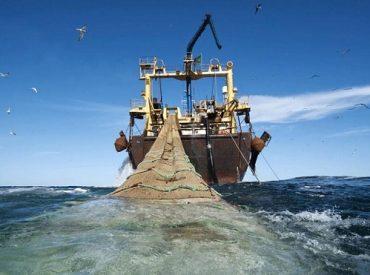 Subpesca Biobío aumentó cuota de sardina y anchoveta para la temporada de captura 2019