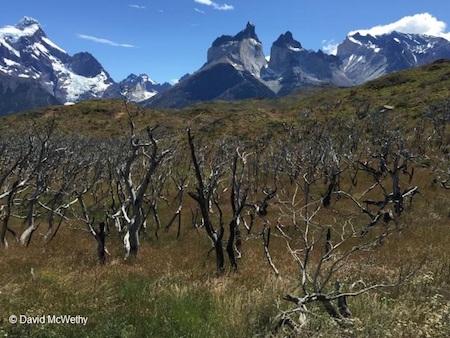 La protección del bosque nativo es clave para combatir los incendios forestales en Chile