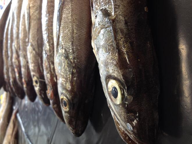 WWF Chile pide extender a dos meses veda de merluza común