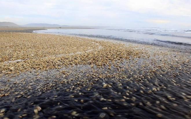 Fue lanzado proyecto que implementará el primer laboratorio de toxinas marinas del Biobío