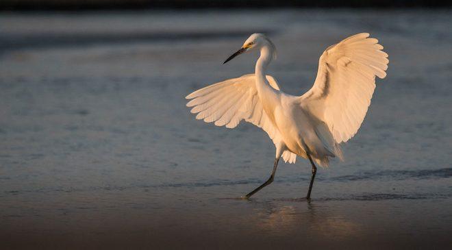Lanzan en Valdivia inédito Atlas de Aves Nidificantes de Chile