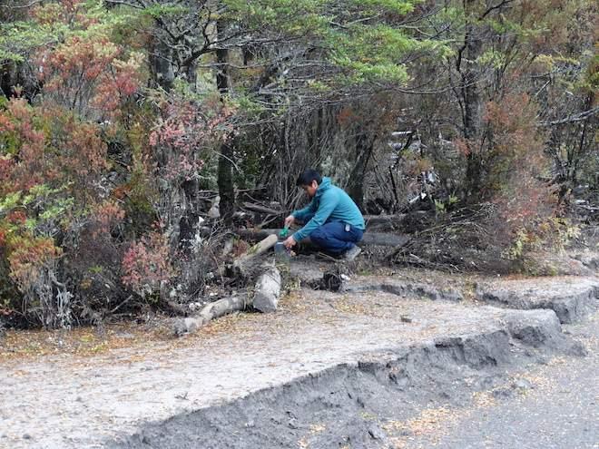 Primer estudio en Chile revela consecuencias de la ceniza volcánica en el mejillón nativo