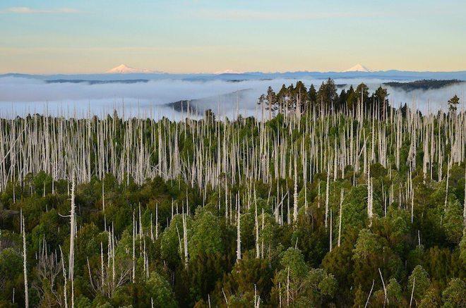 Operadores turísticos podrán trabajar en tres áreas silvestres protegidas de la Región de Los Ríos