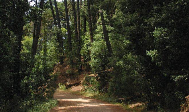 Desarrollan experimento pionero de restauración ecológica en Reserva Nacional Nonguén