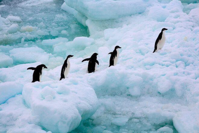 Greenpeace pide con urgencia la protección del océano Antártico