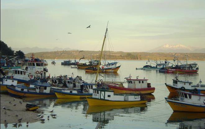 Baja de cuota del sector merlucero, interacción con lobos marinos y marea roja marcan agenda de reunión entre autoridades regionales y pescadores de Calbuco