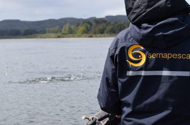 Con embarcación y vigilancia diaria Sernapesca refuerza plan de manejo de lobos marinos del Humedal Río Cruces de Valdivia