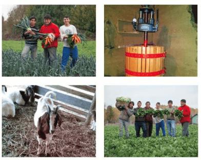 Emprendedores rurales de todo Chile se capacitan gratuitamente para fortalecer sus proyectos